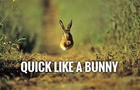 Like A Bunny | fast quotes fast sayings fast picture quotes