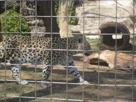 lincoln park zoo picture of lincoln park zoo chicago