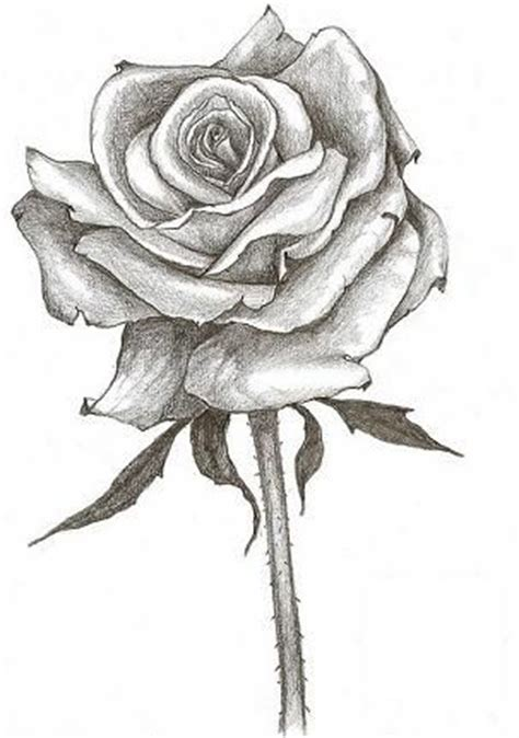 full flowering rose tattoo design flower vine tattoos