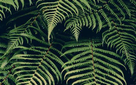 mn leaf green dark nature jan erik waider wallpaper