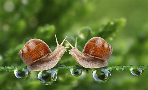 un caracol a snail 191 cu 225 nto vive un caracol