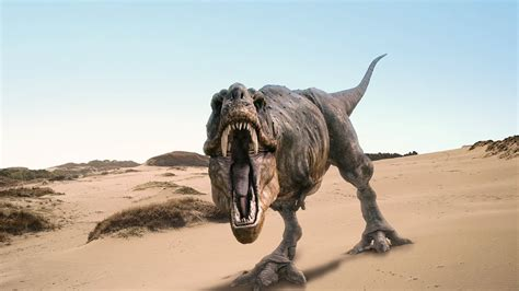 t rex t rex wallpapers fun animals wiki videos pictures stories