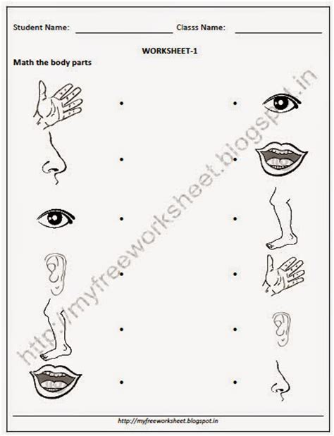 free worksheet parts of the human parts