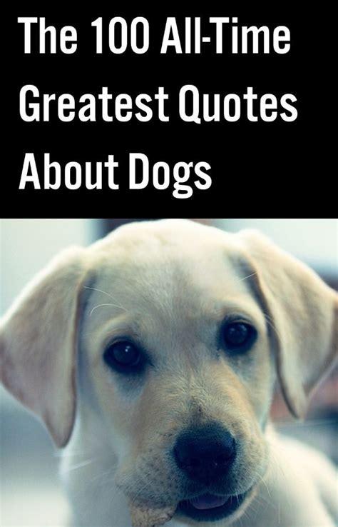 dog  friend quotes ideas  pinterest