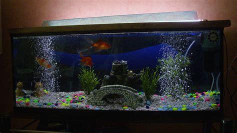 Pompa Co2 Aquarium aquarium poisson