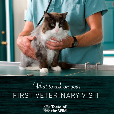 how much is a vet visit for a puppy 8 things to ask your vet on your veterinary visittaste of the pet food