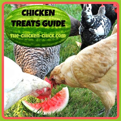 chicken treats chicken treats guide don t your pets to the chicken 174