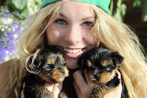 teacup yorkie puppy names teacup yorkie puppies dogtime