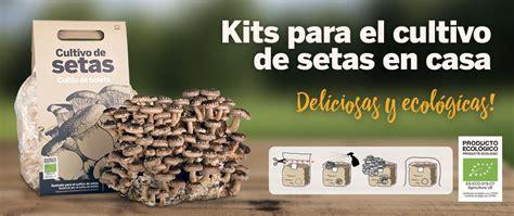 setas para cultivar en casa kits para el cultivo de setas en casa sustratos semillas