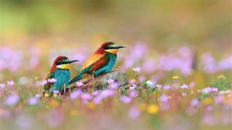 wallpaper with birds flowers for flower lovers flowers and birds desktop