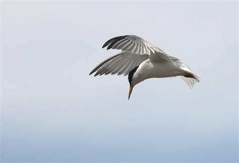 www bobhogeveen nl birds of lesvos 2013 img 0627