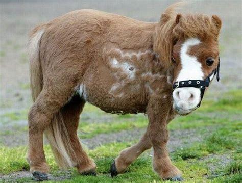 mini pony charming miniature koda damn cool pictures