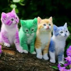 the color kittens colour cats faheem