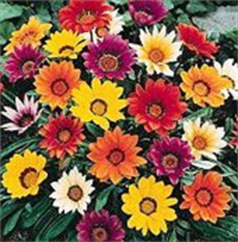 high heat plants 1000 ideas about colorful flowers on pinterest flowers