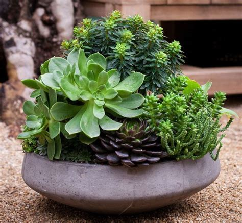 dish garden containers succulent dish garden by mobile landscapes gardening