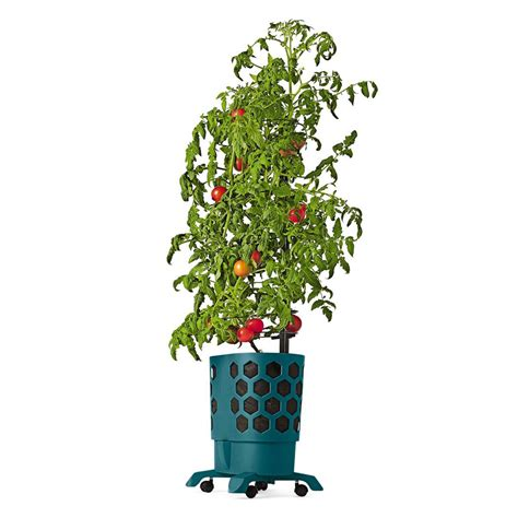 self water planter gardener s revolution self watering tomato planter with