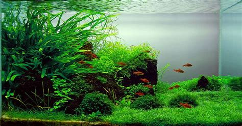 how to aquascape a freshwater aquarium natural looking freshwater aquariums freshwater aquarium