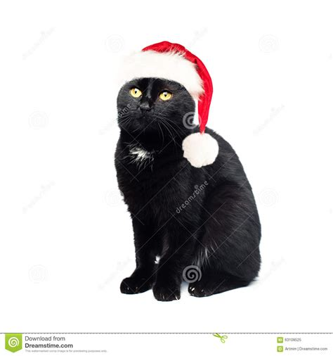 black santa hat black cat in santa hat on white background stock photo