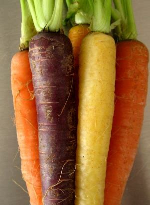 original color of carrots carrots used to be purple before the 17th century