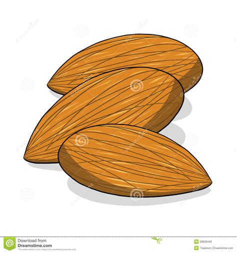 how to make doodle nuts mixed nuts clipart clipart suggest