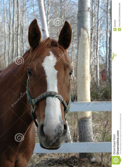 nice hourse nice horse head stock photography image 3556022