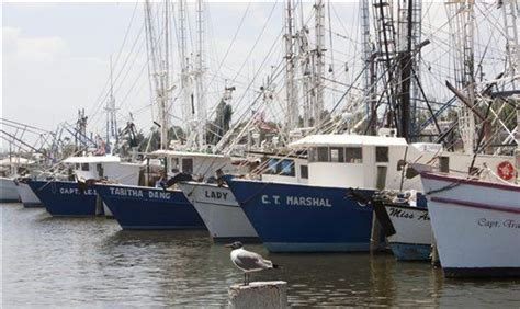 shrimp boat jobs in jacksonville fl gulf coast shrimping in tough times after spill and