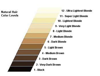 hair color levels june 171 2012 171 mane depot hair extension supplies and