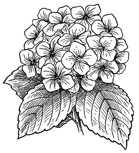 how to draw doodle flowers 25 best ideas about flower line drawings on