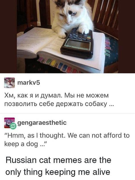 Russian Cat Meme - 25 best memes about russian cat russian cat memes