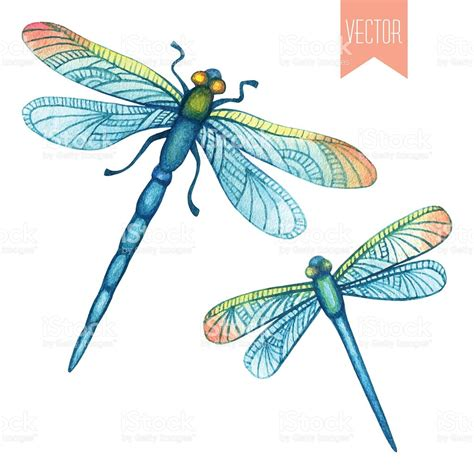 dragonfly clipart watercolor set of dragonflies stock vector 492396238