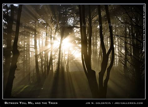 Landscape Lighting Trees - 9 lighting types to harness amp improve your photography