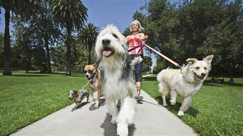 what breed of are you what breed of are you find out with our quiz bt