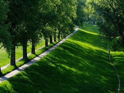 imagenes verdes paisajes foto gratis paisaje 193 rboles hilera de 193 rboles imagen