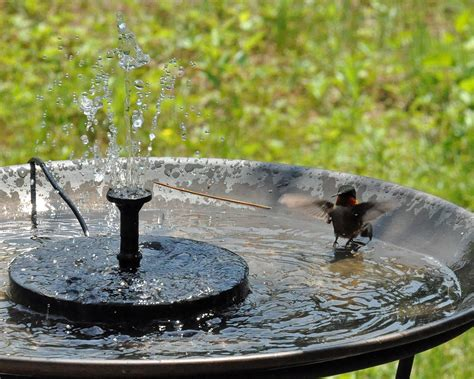 best bird bath for hummingbirds birdcage design ideas