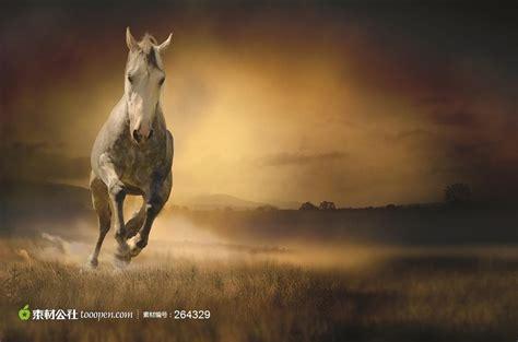 powerpoint templates free download horse 草原奔跑的马图片下载 素材公社 tooopen com