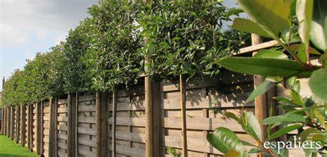 cer gordijnen bladhoudend producten sfeerboomkwekerij espaliers