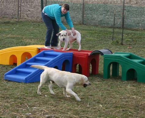backyard dog breeders 48 best dog play yard ideas images on pinterest