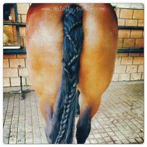 hairstyles for horses 17 best images about horse clips manes tail designs on
