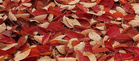 tappeto rosso tappeto rosso juzaphoto