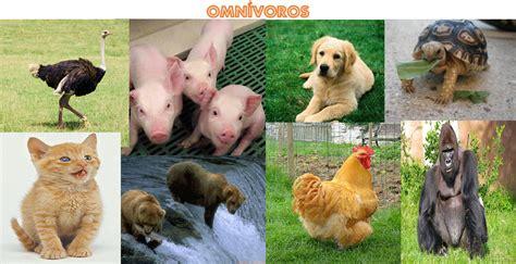 imagenes de animales hervivoros omnivoros y carnivoros 4 como se alimentan 171 world family animal