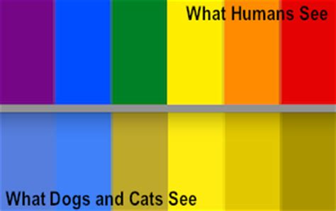 colors cats can see why are cats and dogs color blind