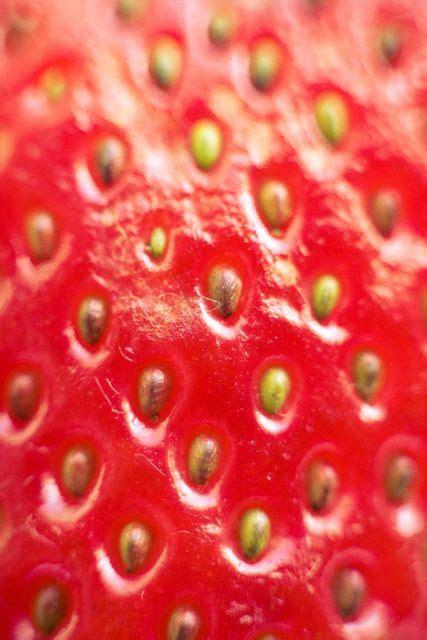 macro pattern photography strawberry macro photography by akira2506 via flickr