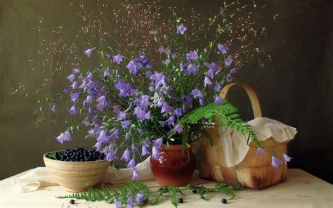 wallpaper flower in pot download flower pot wallpaper 42734 1920x1200 px high