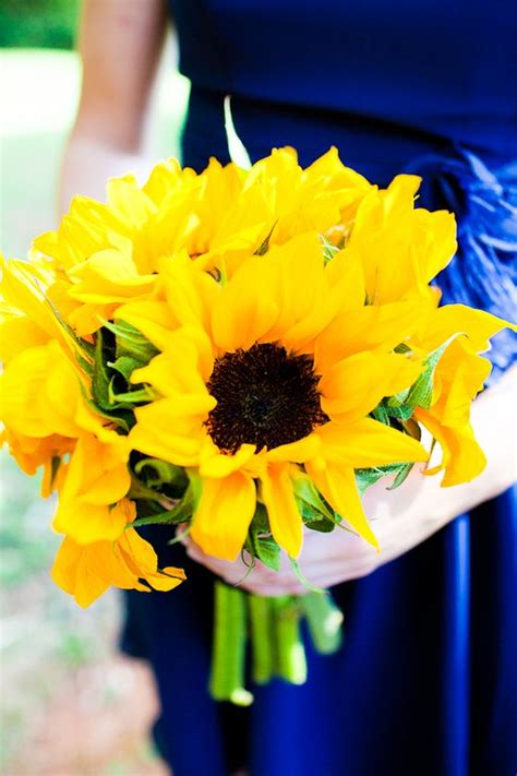 Royal Sunflower sunflowers royal blue and royals on