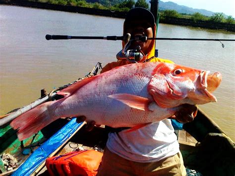 Joran Pancing Bawal cara mancing ikan merah siang malam hari raja umpan