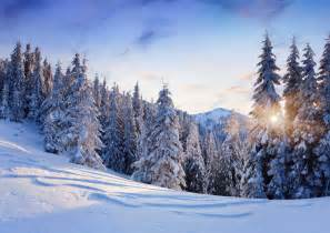 Nature winter snow mountain clouds frost day christmas tree fuzzy pure