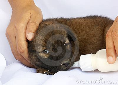 bottle feeding newborn puppies feeding puppy with a baby bottle stock photo image 18494440