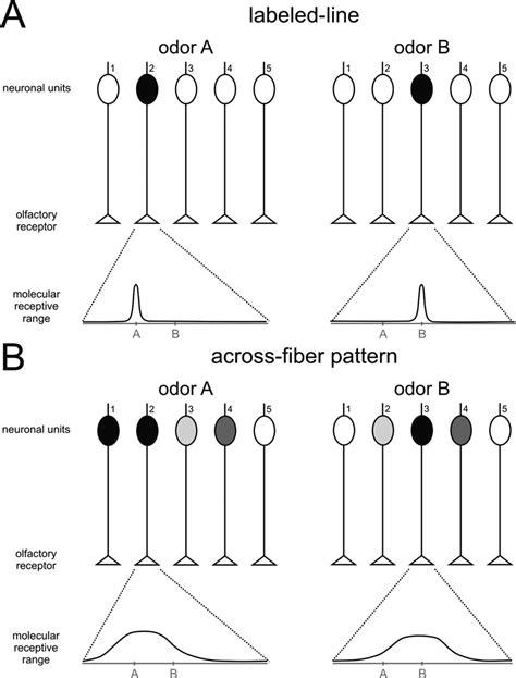across fiber pattern theory definition frontiers understanding the logics of pheromone