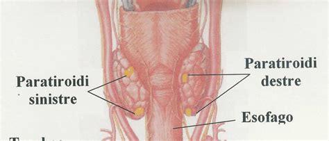 in quali alimenti si trova lo iodio cicciottelli it i cibi fortificati che salvano la tiroide