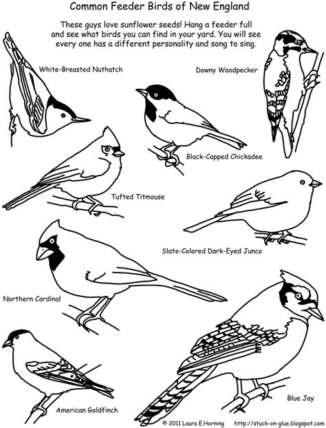 coloring page bird feeder free bird feeder coloring pages